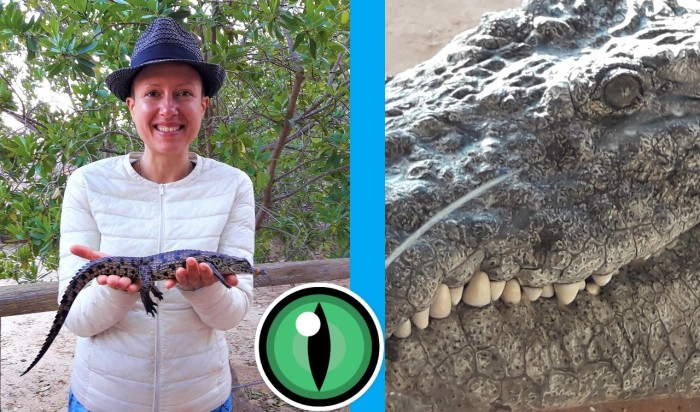 Claire Samuel Review of #DjerbaExplore the #crocodile farm in Djerba, Tunisia